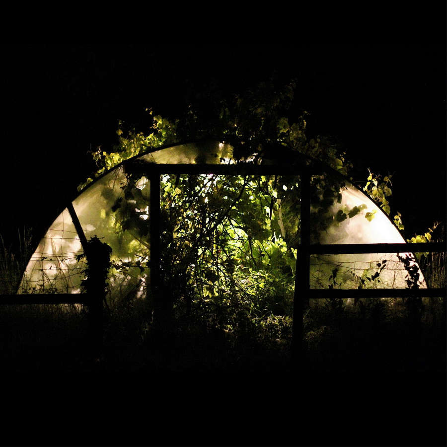 Polytunnel at Night